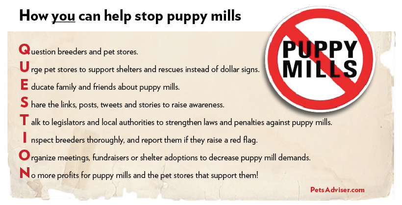 stop-puppy-mill-pets-adviser